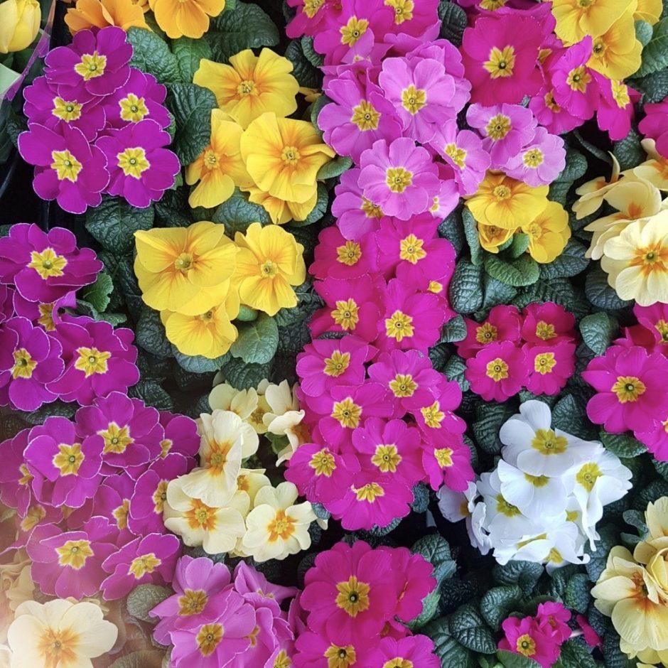 Frühlingsblumen – 4 Reiseziele für die schönsten Frühlingsblumen
